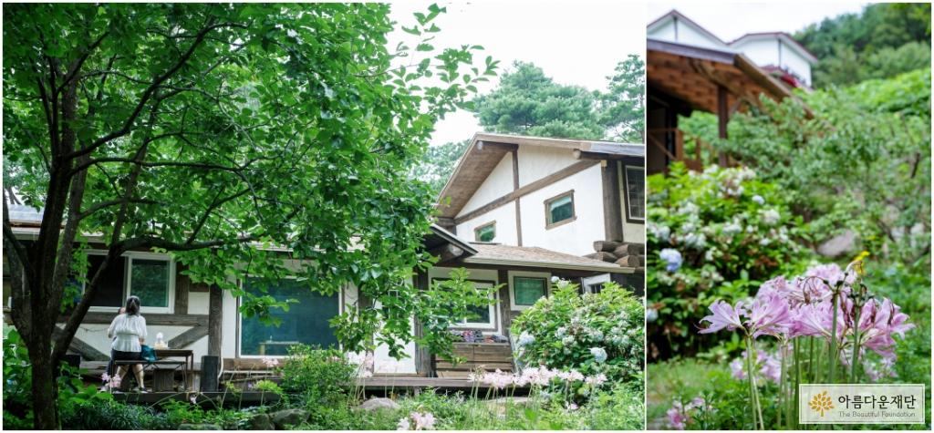 통나무집 앞에 예쁜 상사화와 감나무가 피어 있다.