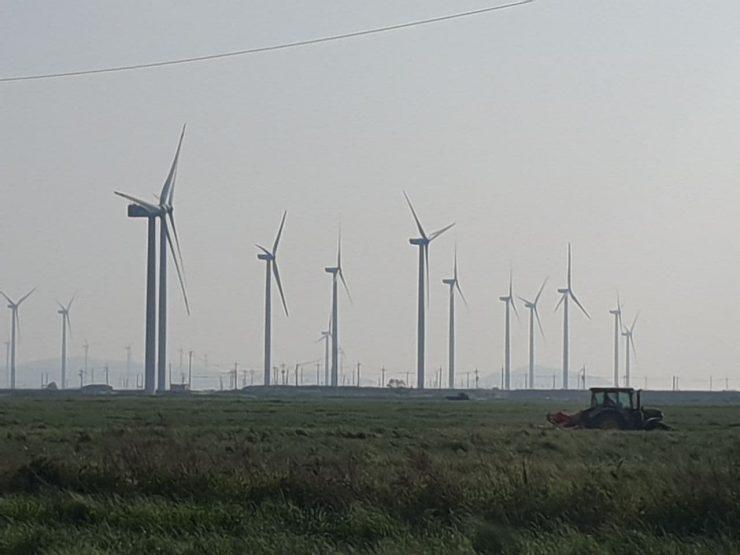 전남 영광의 풍력발전기들. 벼 밭이 너르게 펼쳐져 있고 너머로 풍력발전기가 줄지어 있다.