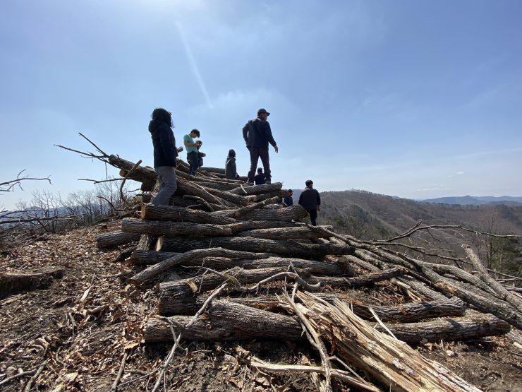 청송 면봉산 육상풍력발전예정지 벌목현장. 벌목한 굵은 나무 기둥이 켜켜이 쌓여있다.