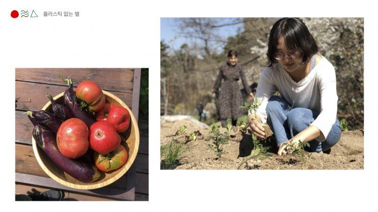 사진(왼) 직접 기르고 수확한 탐스러운 가지와 토마토가 나무그릇에 담겨있다 / 사진(오) 단발머리에 안경을 쓴 여성 참여자가 흰 티셔츠에 청바지를 입고 밭에 모종을 심고 있다